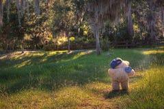 Плюшевый медвежонок беглеца Стоковое Изображение RF
