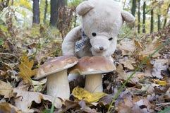 Плюшевый медвежонок, подборщик гриба Стоковые Изображения RF