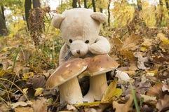 Плюшевый медвежонок, подборщик гриба Стоковая Фотография