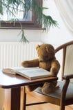 Плюшевый медвежонок читает книгу в библиотеке - изучать сцену стоковое изображение