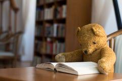 Плюшевый медвежонок читает книгу в библиотеке - изучать сцену стоковая фотография