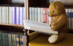 Плюшевый медвежонок читает книгу в библиотеке - изучать сцену стоковые изображения