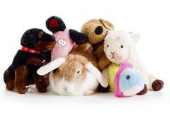 Плюш игрушки и реальный кролик сокращают голландцев карлика зайчика Кролик пасхи с игрушками Натренированная фотография студии пр Стоковое фото RF