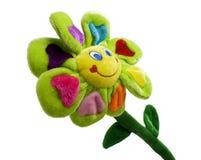 плюш цветка Стоковые Фотографии RF