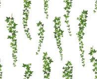 Плющ зеленого цвета Creeper Завод стены взбираясь вися сверху Лозы плюща украшения сада Безшовная иллюстрация предпосылки иллюстрация вектора