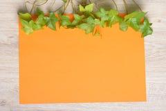 Плющ на бумаге цвета Стоковые Изображения RF