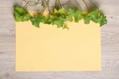 Плющ на бумаге цвета Стоковая Фотография