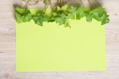 Плющ на бумаге цвета Стоковая Фотография RF
