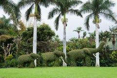 плющ 3 слонов Стоковая Фотография
