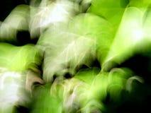 плющ Стоковые Фото