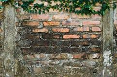 плющ brickwall Стоковое фото RF