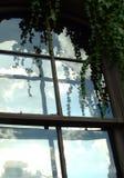 плющ bridgeport Стоковая Фотография RF