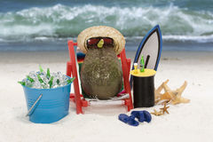 пляж авокадоа Стоковые Фото