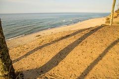 Пляж Балтийского моря с деревьями и тенями стоковое фото