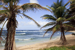 пляж Барбадосских островов красивейший Стоковое фото RF