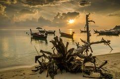 пляж восхода солнца с передним планом пня Стоковая Фотография RF