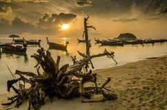 пляж восхода солнца с передним планом пня Стоковое Изображение