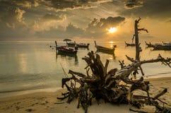 пляж восхода солнца с передним планом пня Стоковая Фотография