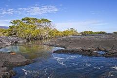 пляж вулканический Стоковая Фотография