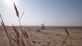Пляж залива Балтийского моря с белым песком в заходе солнца - видео 4K с медленным движением камеры и внутренней стабилизацией видеоматериал