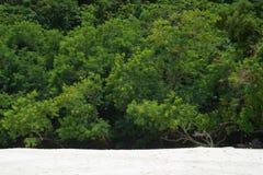 Пляж и зеленые чащи леса Природа предпосылки Стоковое фото RF