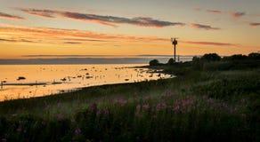 Пляж на зоре или сумрак с лесом стоковые фотографии rf