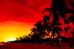пляж около померанца над заходом солнца моря ладони Стоковые Фотографии RF