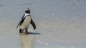 Пляж пингвина, Южная Африка Стоковое Фото