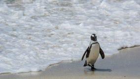 Пляж пингвина, Южная Африка Стоковая Фотография RF
