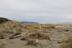 Пляж побережья Орегона стоковое изображение rf