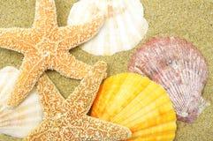 пляж предпосылки Стоковая Фотография RF