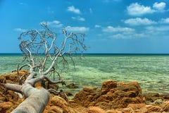 Пляж Пхукета с упаденным деревом Стоковые Фото