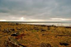 пляж северо-запад pacific стоковые фотографии rf