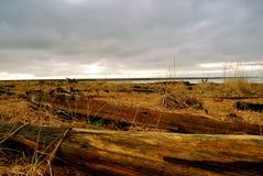 пляж северо-запад pacific стоковое фото rf