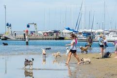 Пляж собаки улицы Sandown в Брайтоне в внутренних восточных пригородах bayside стоковые фото