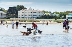 Пляж собаки улицы Sandown в Брайтоне в внутренних восточных пригородах bayside стоковые фотографии rf
