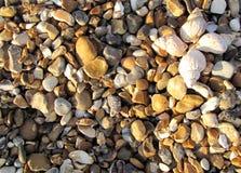 пляж создал раковины цветка каменистые стоковая фотография rf