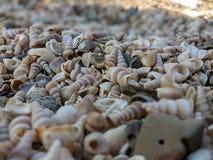 Пляж сокровища стоковые изображения rf