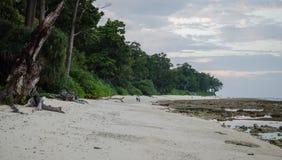Пляж с белым песком и деревья Стоковое фото RF
