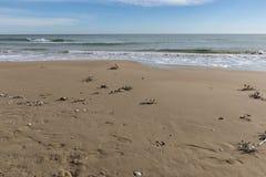 Пляж с остатками высушенных заводов Стоковое Фото