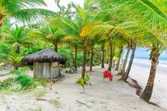 Пляж с пальмами и томбуем кольца Стоковая Фотография RF