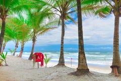 Пляж с пальмами и томбуем кольца Стоковое Изображение
