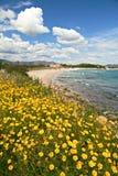 пляж цветет желтый цвет весны Стоковая Фотография