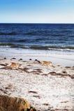 пляж adelaide стоковое фото