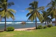 пляж bathsheba Барбадосских островов Стоковые Изображения RF