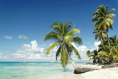 пляж caribbean Стоковая Фотография