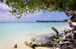 пляж caribbean III aruba Стоковое Изображение