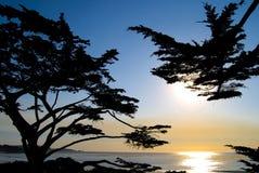 Пляж Carmel Калифорния кипарисов на заходе солнца стоковые изображения rf