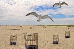 пляж jones New York Стоковое Фото