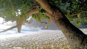 Пляж Kelingking на острове Penida в Индонезии Стоковые Изображения